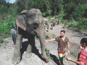 elephant14