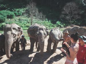 elephant17