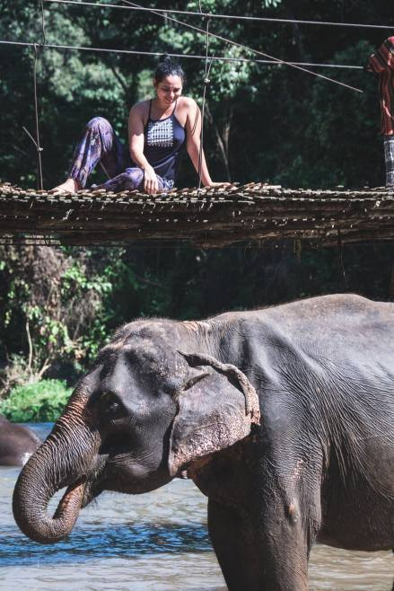 elephant21