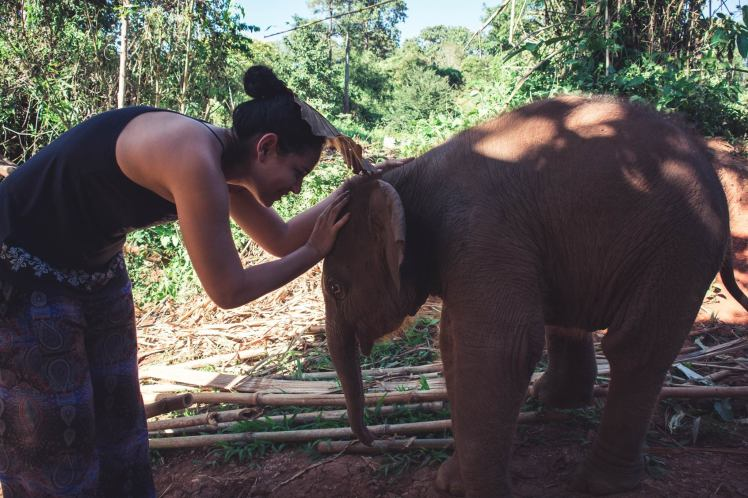 elephant22