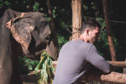 elephant23